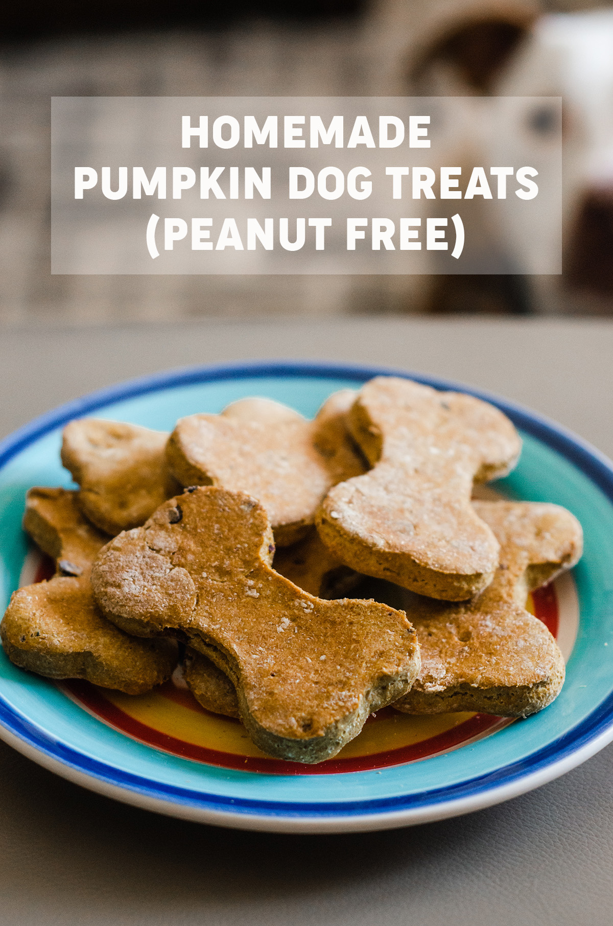 Simple homemade dog treats made with pumpkin puree, whole wheat flour, and bacon.